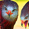 Old quarrelsome birds slide puzzle