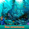 Sea ​​creatures. Find objects