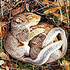 Sleepy squirrels slide puzzle