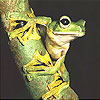 Strong frog slide puzzle