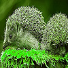 Green hedgehogs puzzle