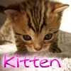 Kitten : Find the Differences