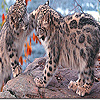 Lovely leopard brothers puzzle